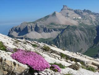 flora-La Pancalera