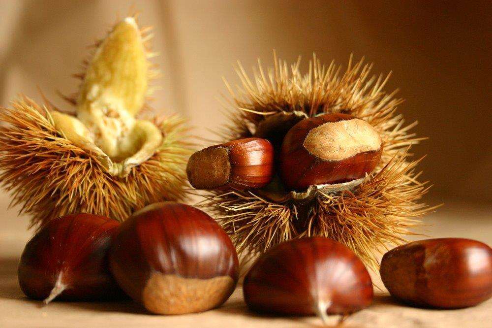 Cinque giorni di eventi Slow Food