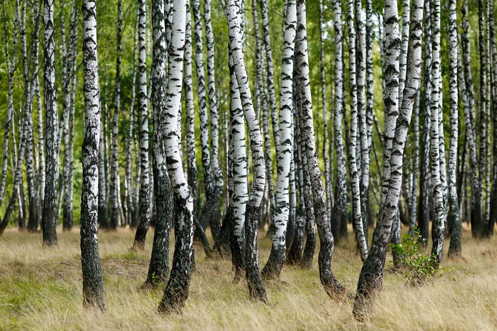 Ripartono anche in Piemonte le attività legale alla silvicoltura