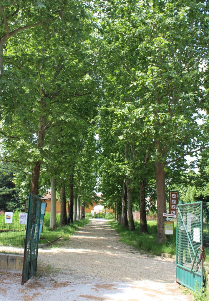 piante-parco-cascina-vigna