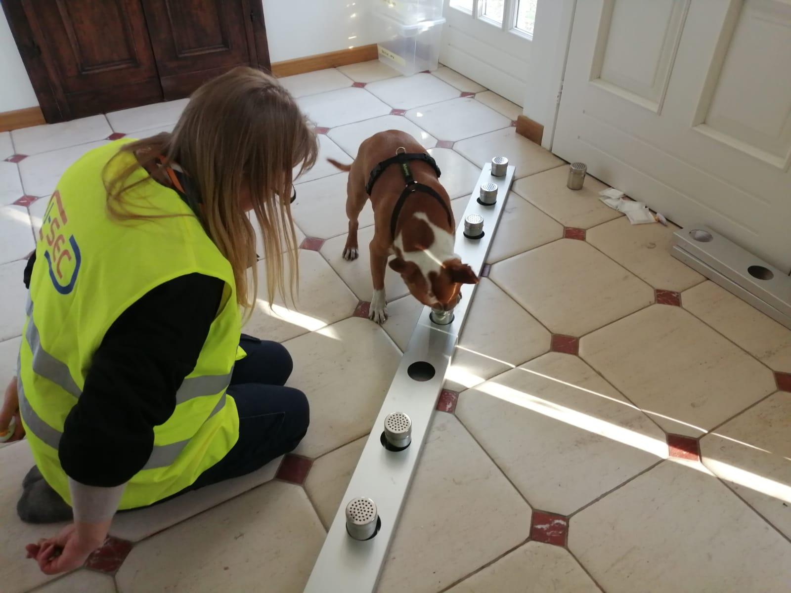 I cani anti-covid presto all'Aeroporto di Cuneo Levaldigi