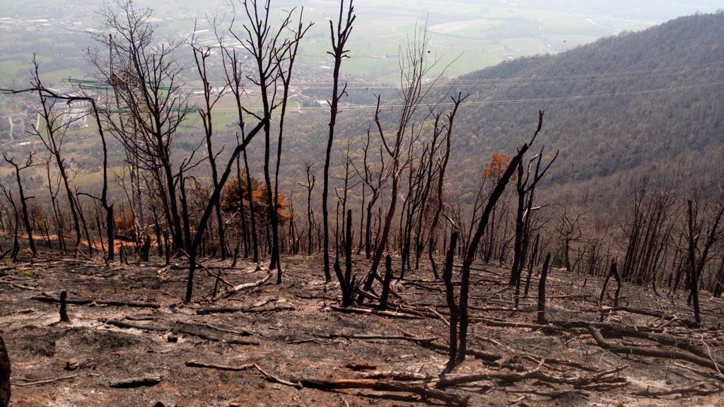 Incendio Musinè, Consiglio Regionale del Piemonte promuove raccolta fondi