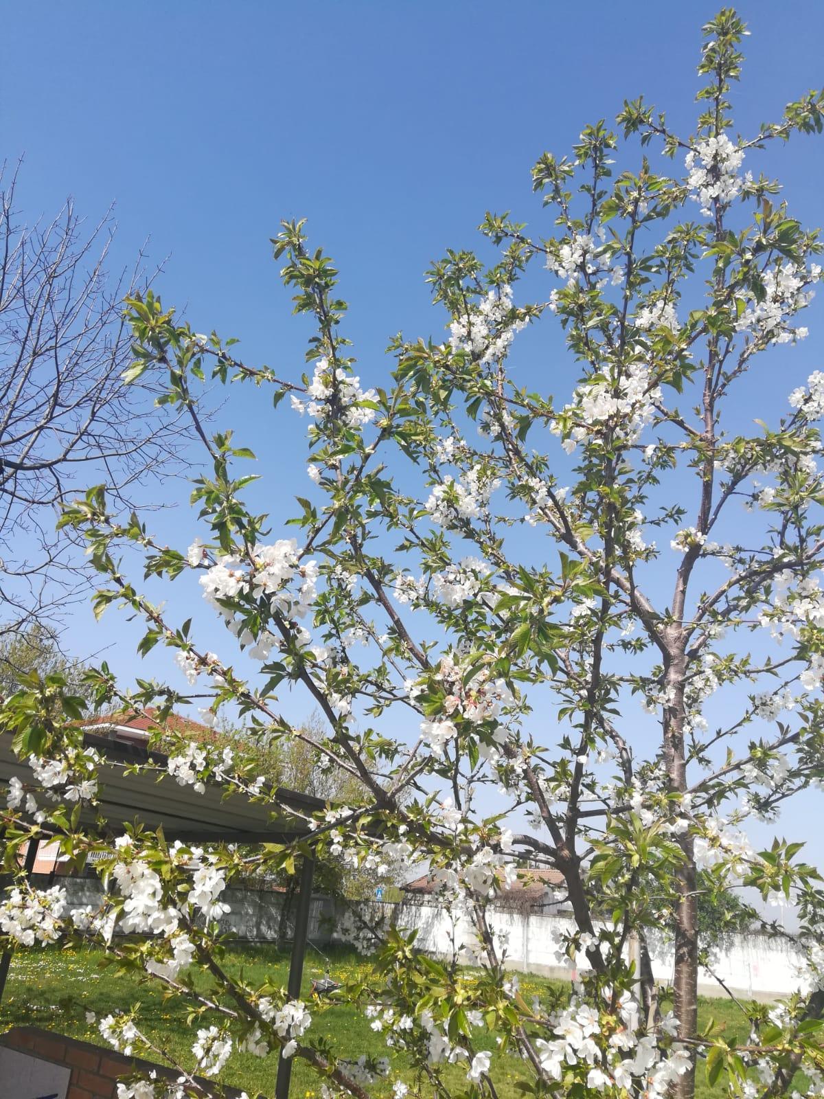 Casa Frisco, Karmadonne e il ciliegio fiorito nel giardino