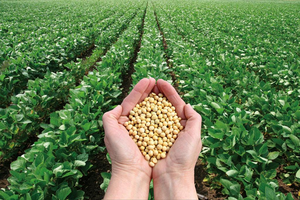 soia-pianta-copasudi-scuola-agraria-lombriasco-la-pancalera