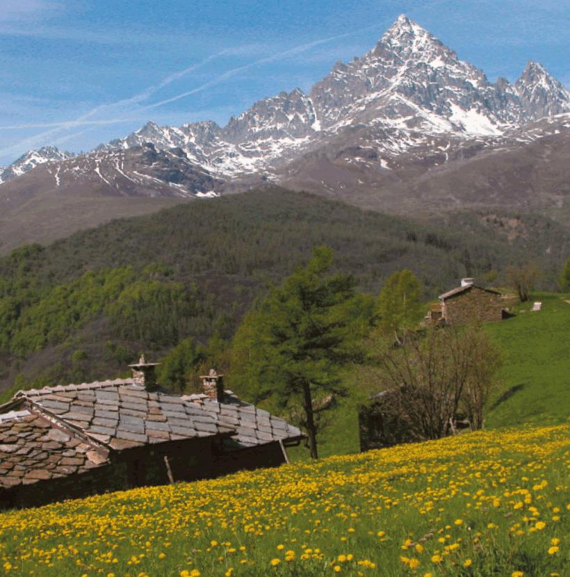 Tre webinar col Parco del Monviso per parlare di biodiversità