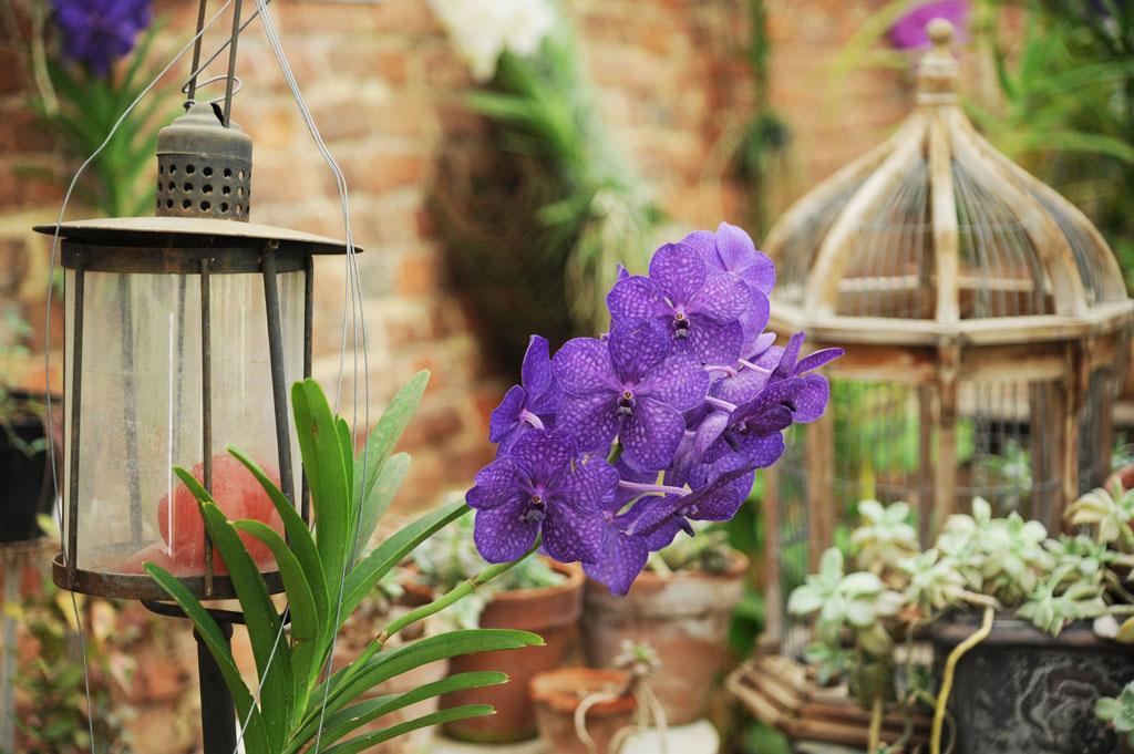 Il Castello di Pralormo apre il suo parco per Madamigella Orchidea