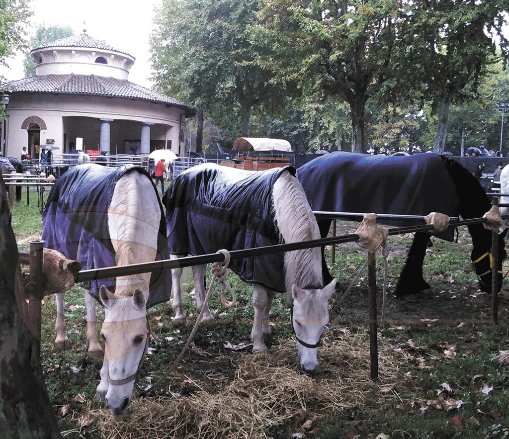 Fiera-mais-cavalli-vigone-la-pancalera