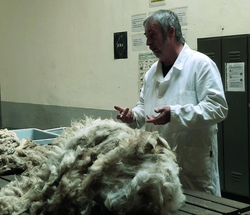 Pulitura lana miagliano la pancalera